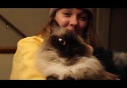 "Close Quarters – ""Living with Pets"""