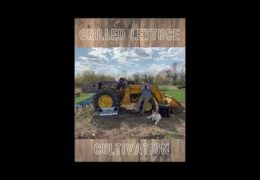 Grilled Lettuce – Cultivation EP